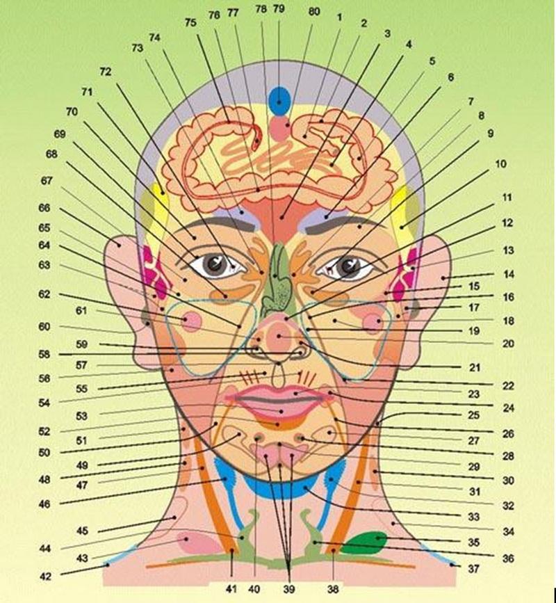 Акупунктурные точки на голове