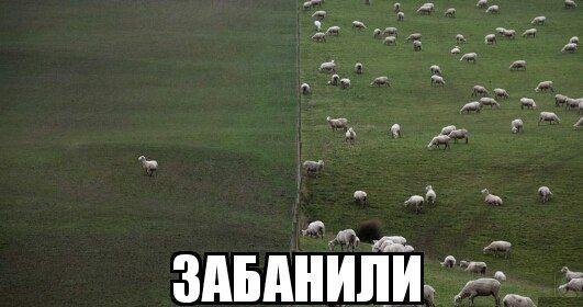 http://mtdata.ru/u23/photo8690/20523411843-0/original.jpg