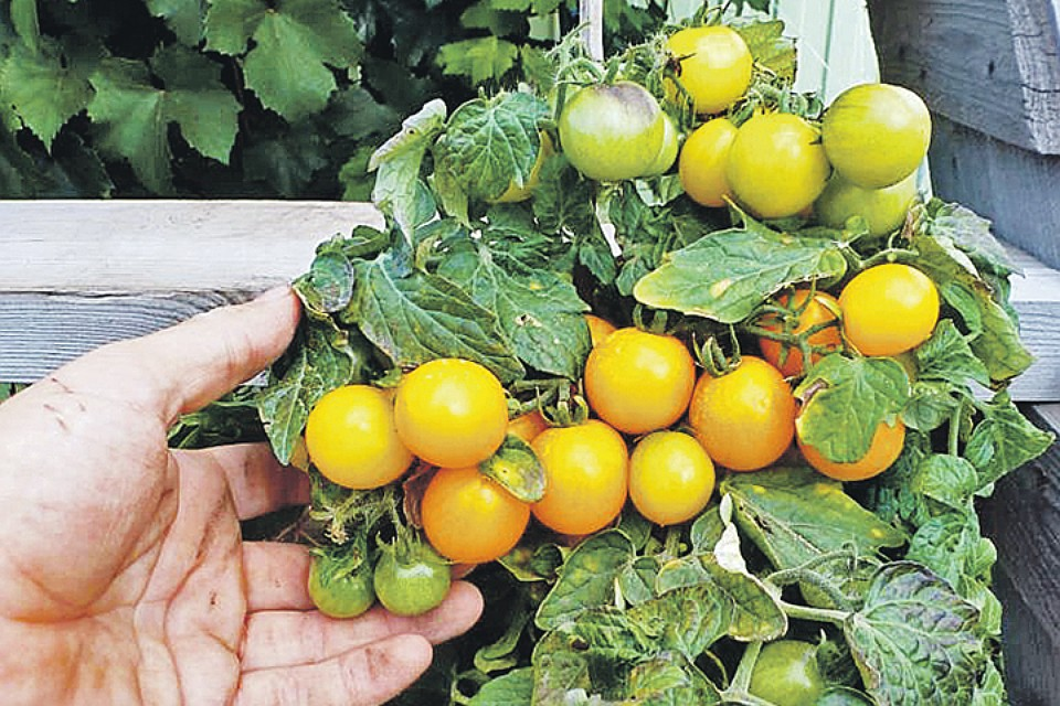 ������ �������� ��������� ����� �������� ��� � ������ - ���. ����: pomidom.ru
