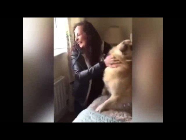 Трогательное видео: воссоединение хозяйки и собаки