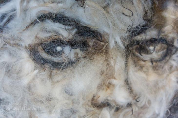 Портреты знаменитостей, сделанные из собачьей шерсти
