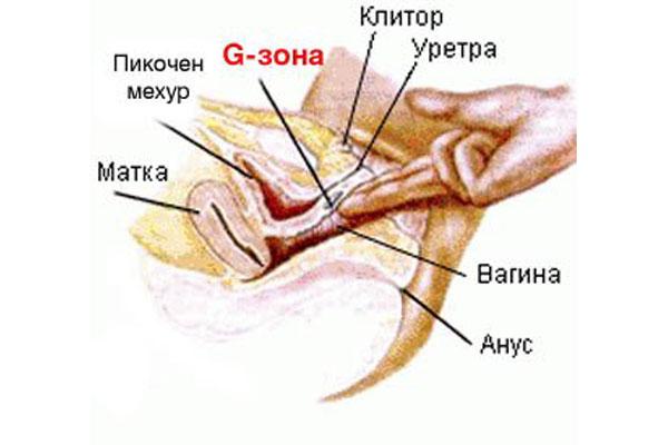 vaginalniy-klitoralniy-kak-otlichit
