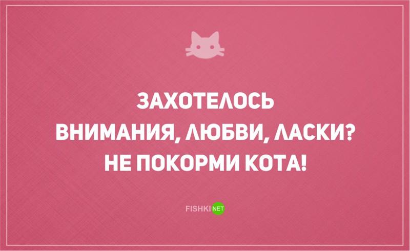 20 открыток о том, что без кота и жизнь не та кот, открытки, юмор