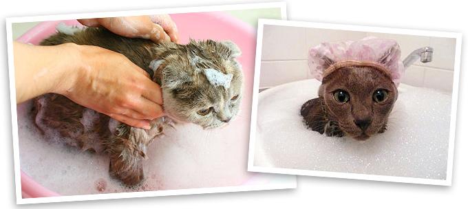 Чем помыть котенка от блох в домашних условиях