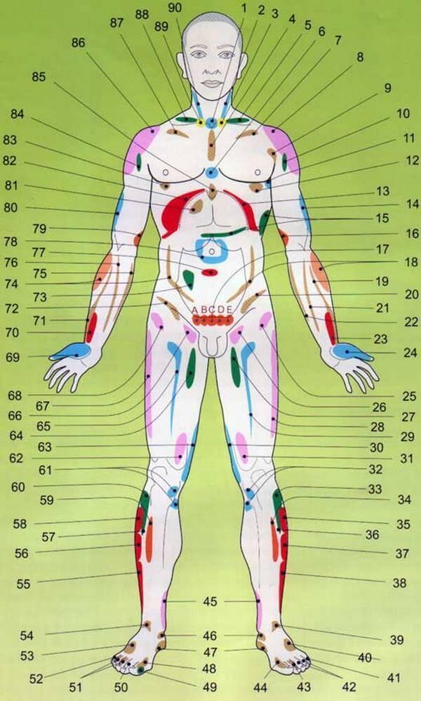 Проекционные зоны внутренних органов на теле человека - узнайте себя лучше!