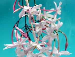 Растения афродизиаки - запахи любви