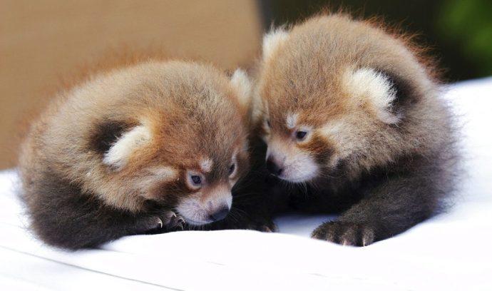 «Рыжие близнецы!» Очаровател…