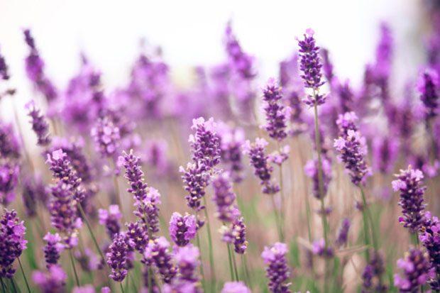 9 ароматов для релаксации