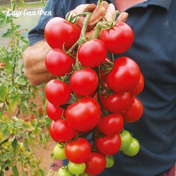 9 секретов хорошего урожая помидоров