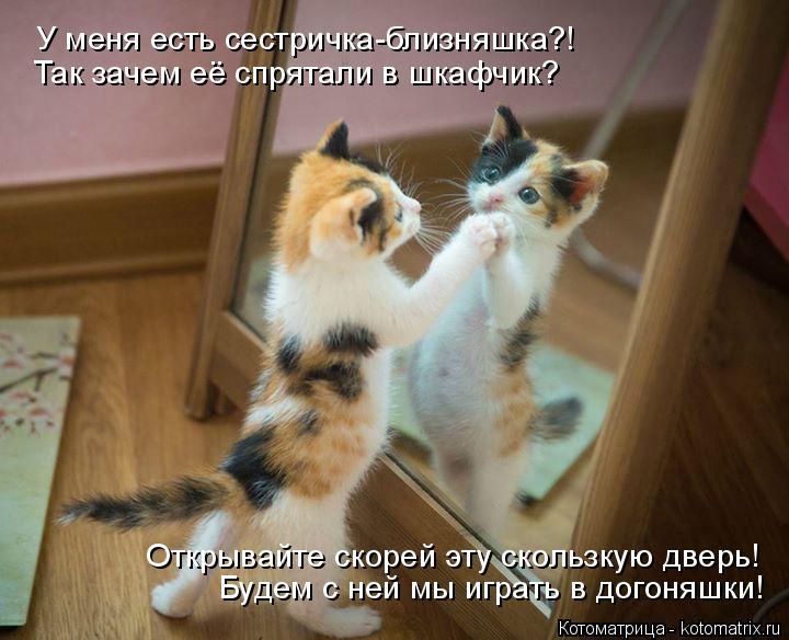 Котоматрица: У меня есть сестричка-близняшка?! Открывайте скорей эту скользкую дверь! Так зачем её спрятали в шкафчик? Будем с ней мы играть в догоняшки!