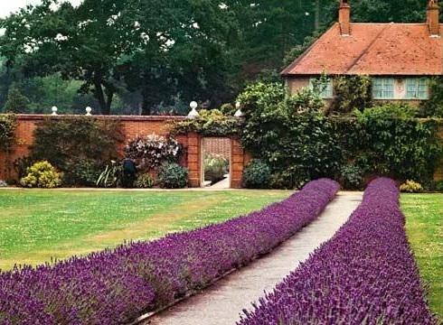 план схема посадки цветника в саду с ирисами пионами астильбой хостой 490 x 360 · jpeg