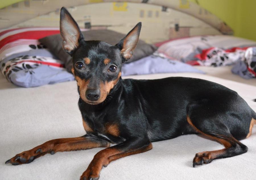 Пиометра - заболевание, убивающее собак за 2 дня