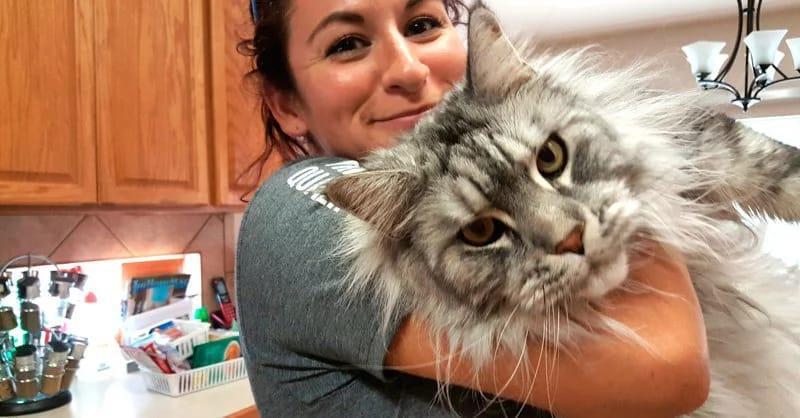 Самые большие коты в мире тоже любят обнимашки!