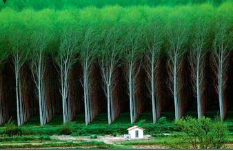 Этот лес находится в Донецкой области ,но он необыкновеннен !