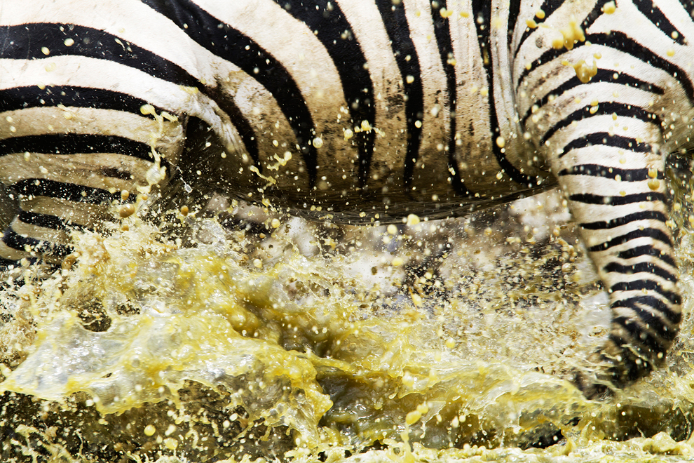 258 Победители фотоконкурса National Geographic 2011