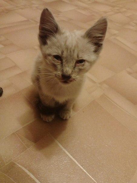 Ровно год назад я нашла своего котика...