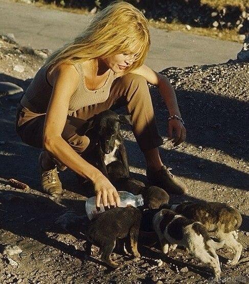 """Брижит Бардо кормит щенят во время съемок """"Вива, Мария""""."""
