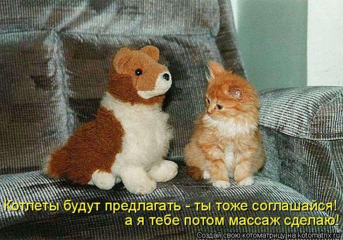 Всемирный день кошек! Всех беззаветных кошколюбов, котофилов и просто кошкообожателей с праздником!