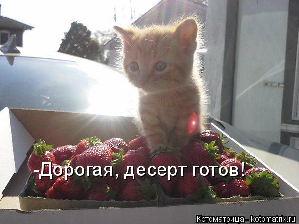 Котоматрица: -Дорогая, десерт готов!