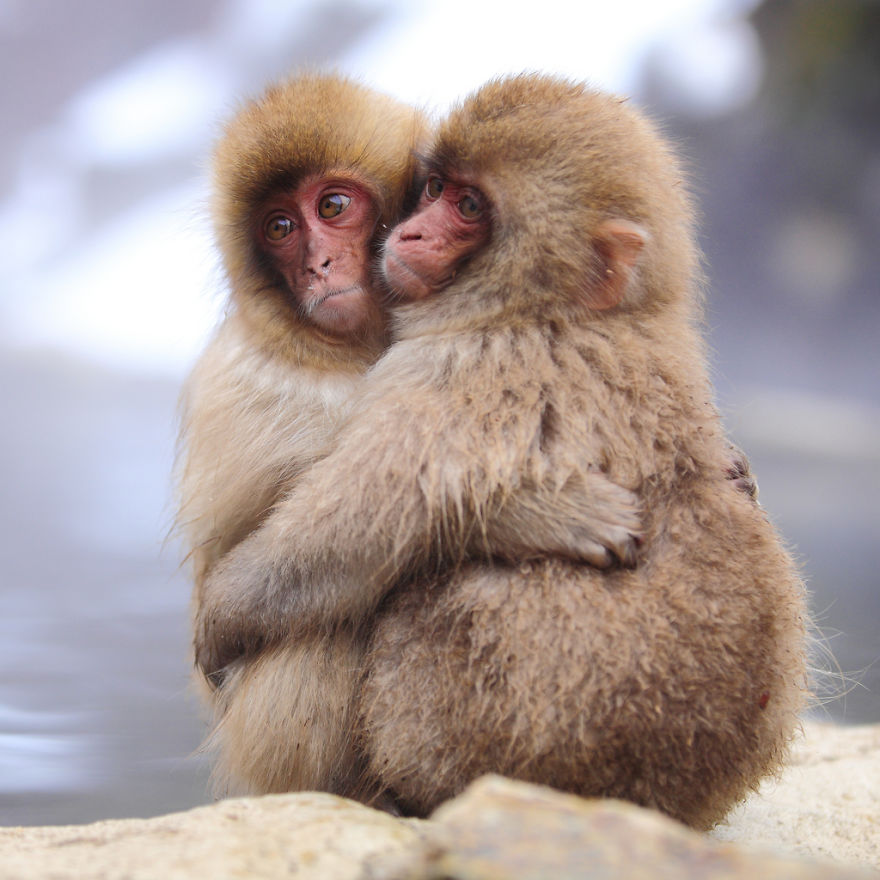 animals-love-couple-2__880