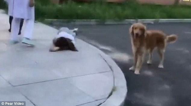 Медики сняли, как пёс охраня…