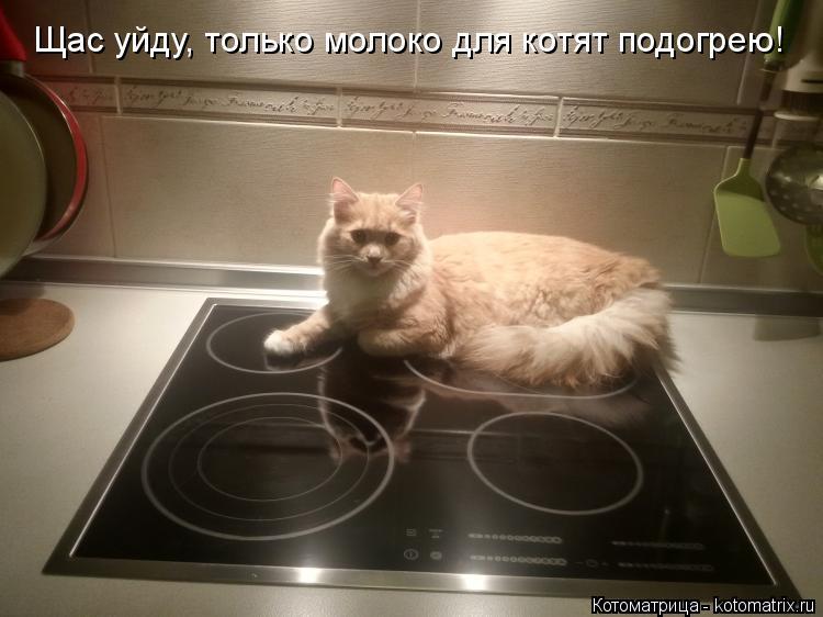 Котоматрица: Щас уйду, только молоко для котят подогрею!