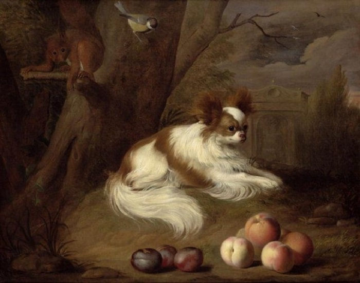 Папильоны кажутся совсем бесполезными комнатными собачками, но одной из них почти удалось спасти жизнь своего хозяина.