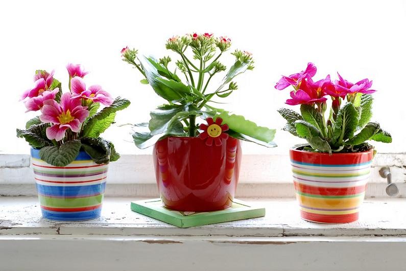 Подробно о популярных комнатных растениях