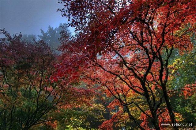 Japan-Park-019