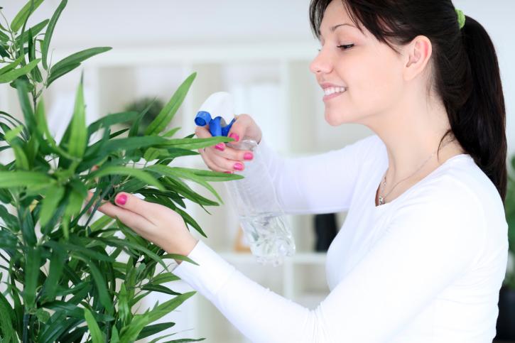 Растения для счастья и любви в доме!
