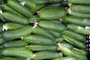 Огурцы салатные и универсальные