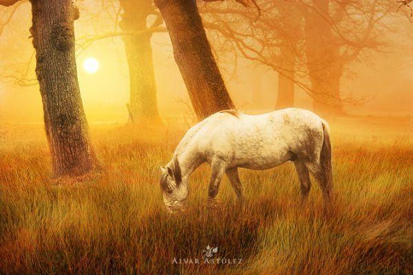 Красивые фотографии природы …