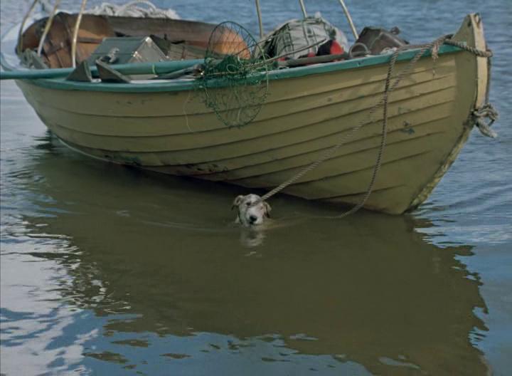 порода собак 3 в лодке не считая собаки
