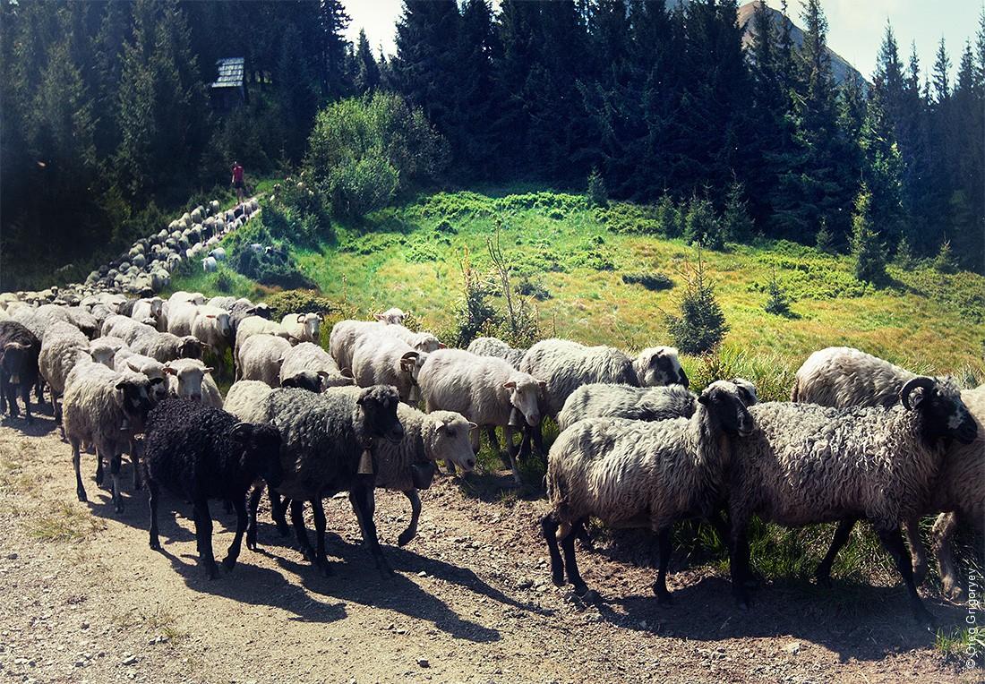 Cioban15 Жизнь чабанов на полонине