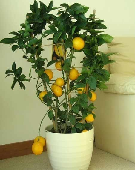 plants1215-5.jpg