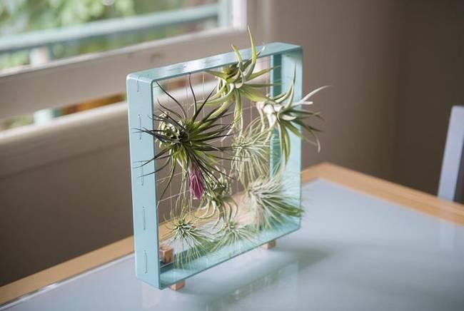 Живую стену из растений в рамке можно поставить на стол