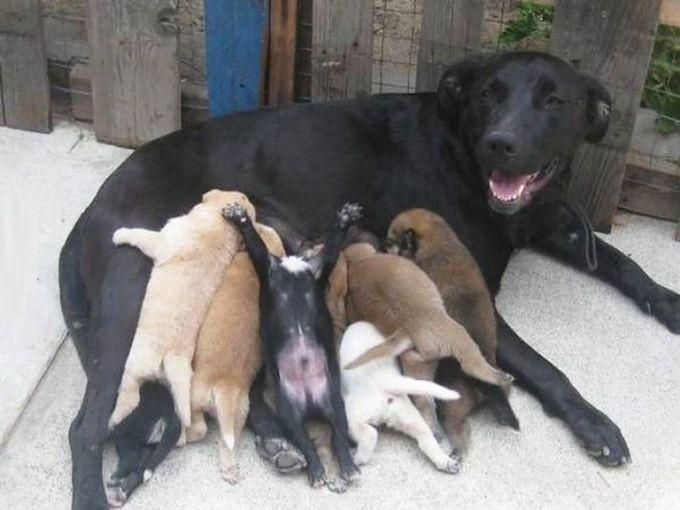 5. Куча-мала животные, потомство, собаки