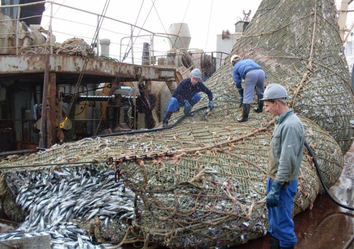 Эти рыбаки разгружали сети, когда увидели нечто эдакое... Вот так улов!