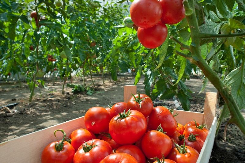 борная кислота для растений применение