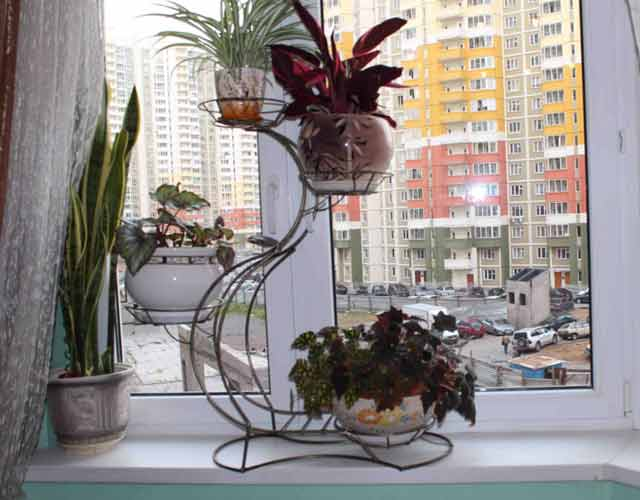 plants1215-17.jpg