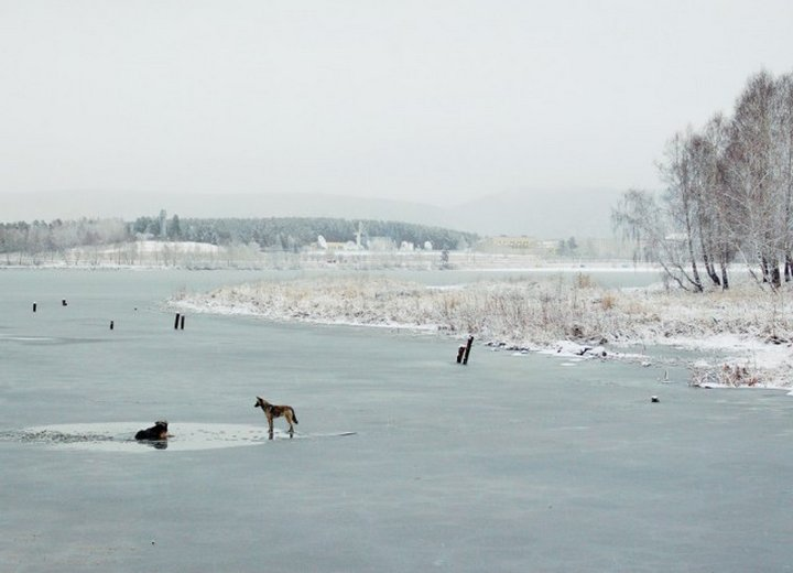 Как спасал провалившуюся под лёд собаку