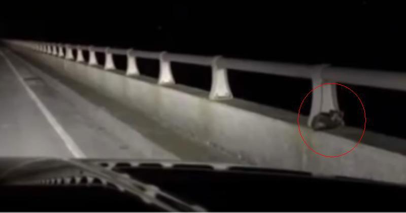 Пара ехала по мосту, когда з…