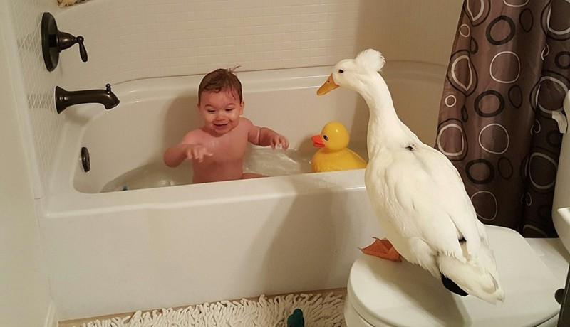 Друг, который не даст в обиду: трогательная дружба мальчика и утки дети, животные, интересное
