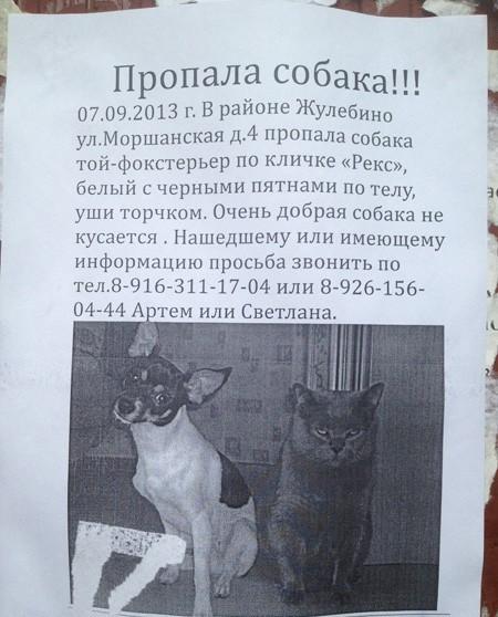 Пишем объявление о пропаже кота