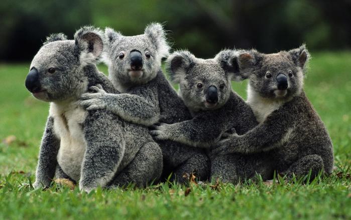 фото животные 21 (700x437, 326Kb)