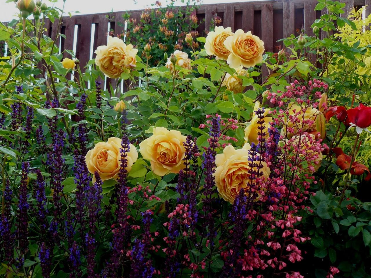 Растения-компаньоны для роз