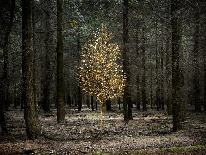 Зеленые миры фотохудожницы Ellie Davies