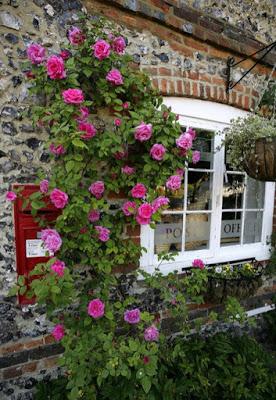 Цветы и стены - красота сочетаний
