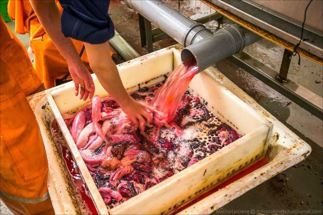 Как делают икру красная икра, производство
