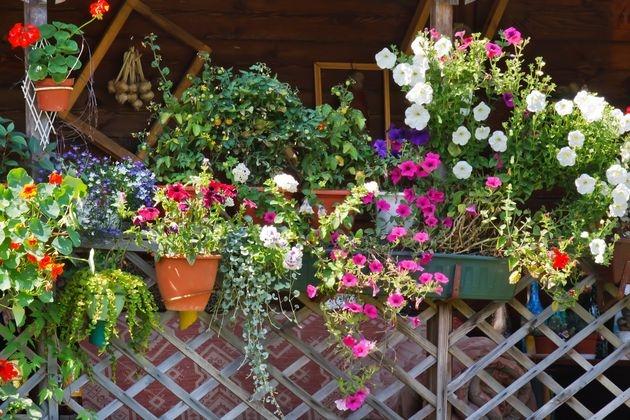 Как повысить иммунитет цветов